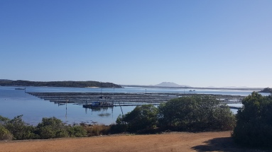 gorgeous expanses of oysters at Coffin Bay