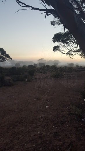 gorgeous foggy morning on the Nullarbor