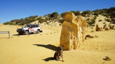 mindDog at the Pinnacles