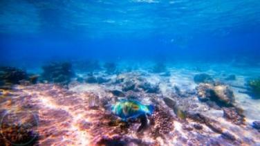 vivid colours and fish life