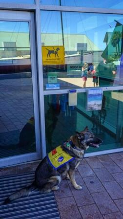 Service Dogs allowed at the Shark Bay Visitor Centre